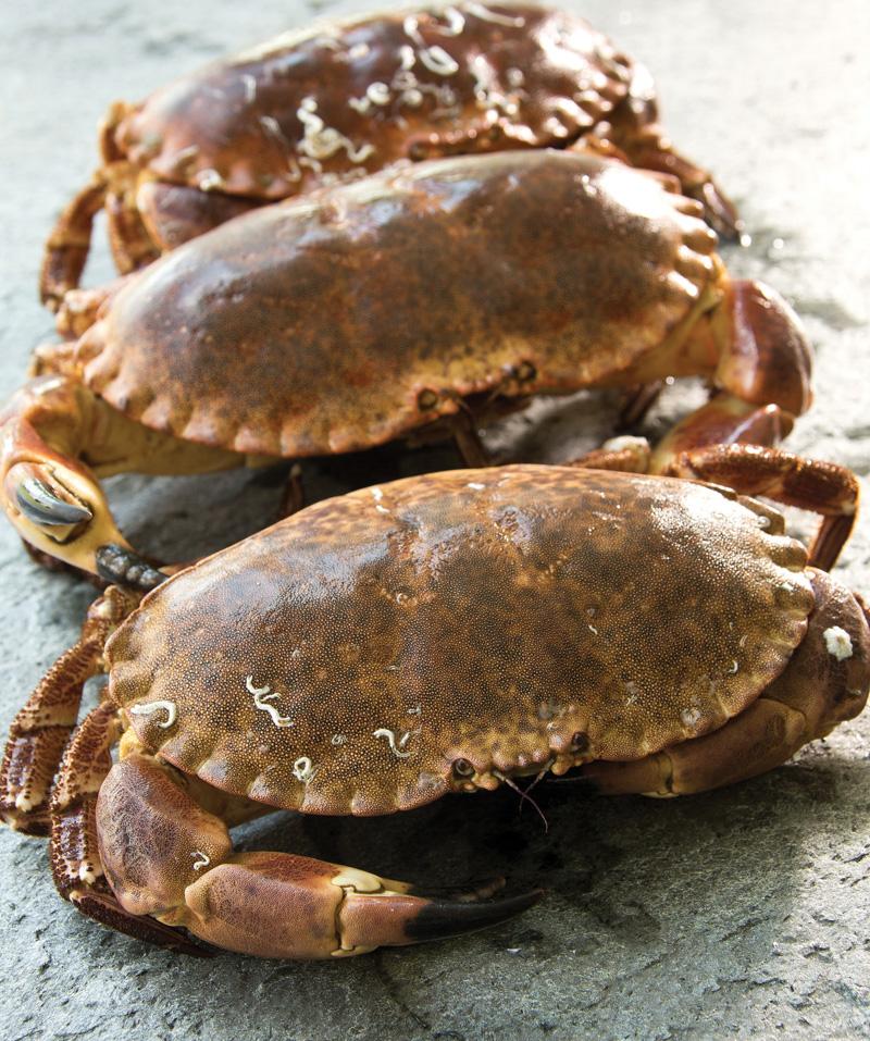 tourteau, vivant, crustacés, spécialiste, expert, mareyeur, produits de la mer, vivants