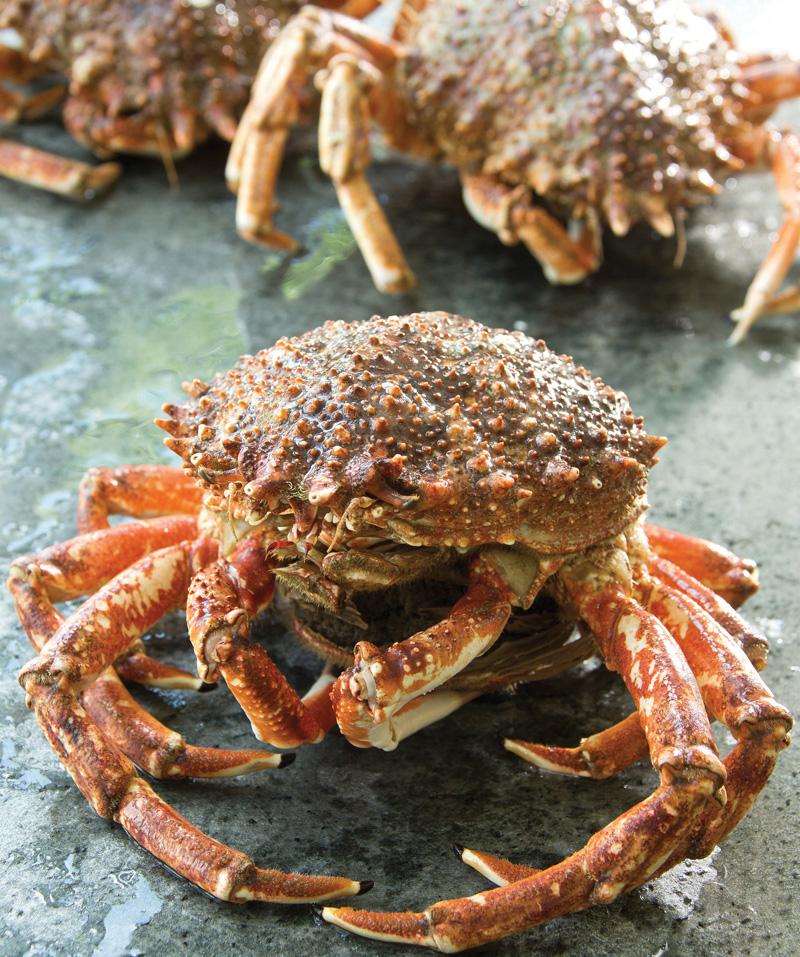 ariagnées, crustacés, vivants, mareyeur, maree, vente, restaurant, poissonnerie, traiteur