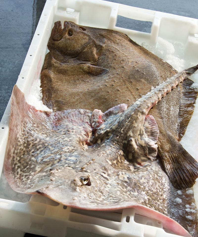 poissons, vivants, entiers, rayon, poissonnerie, vente, mareyeur, expert, produits de la mer, france