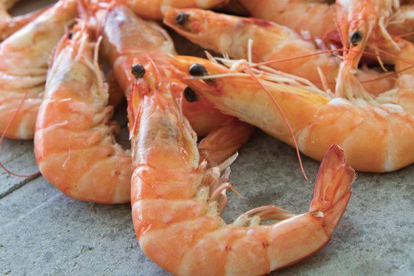 crevettes, coquillages, crustacé, cuits, homard, langouste, araignée, tourteaux,