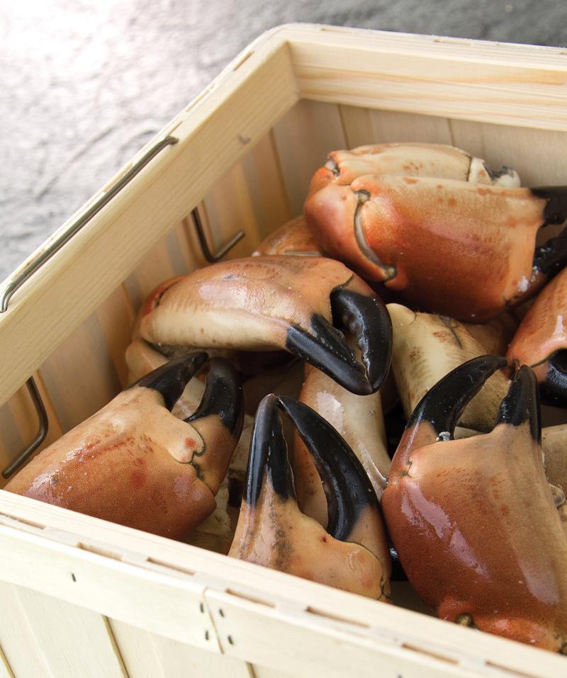 crabe, crustacés, cuits, produits de la mer, Auvergne maree